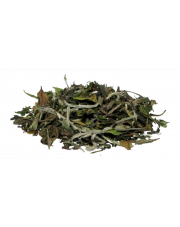Herbata Biała China Pai Mu Tan (Bai Mu Dan)